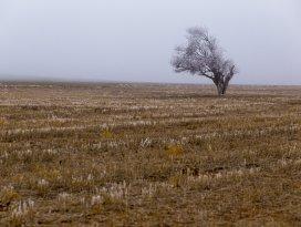 Kışın kurak geçtiği Konya Ovasında kar umudu