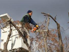 Karatay'da ağaç budama çalışmaları devam ediyor