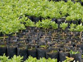 Meram, bitkisini kendi üretiyor
