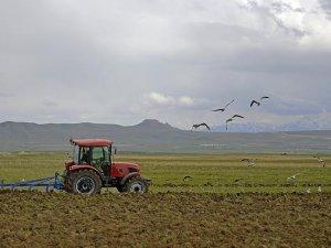 Konya Ovasında etkili olan yağmur çiftçiyi sevindirdi