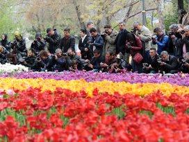 Konya'da lale mevsimi