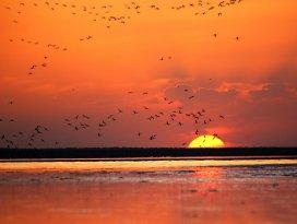 Ereğli Akgöl Sazlıklarının Kırmızı kanatlı melekleri