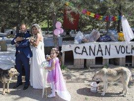 Hayvansever çiftten barınakta düğün