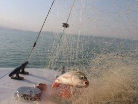 Beyşehir Gölünde yasak dönemde göl balığı yemeyin