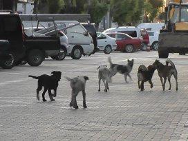 Kulu'da vatandaşlar sokak köpeklerinden tedirgin