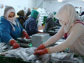 Konyadan 15 ülkeye deniz ürünleri ihraç ediyor