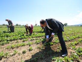 Başkan Özaltun, tarım işçilerini ziyaret etti