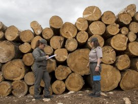 Ormanların kadın korumaları