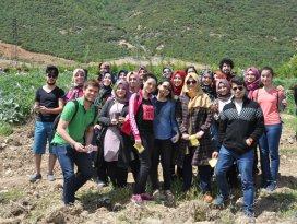 Selçuk Üniversitesi öğrencileri 430 sedir fidanı dikti
