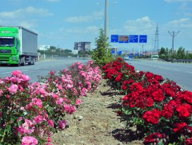 Karamanda şehir girişleri çiçek gibi