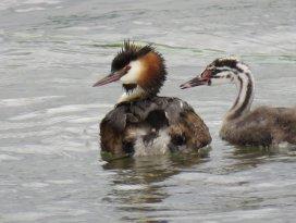 Yavru kuşların büyüdüğü kuş cenneti ilgi odağı