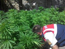 Beyşehirde uyuşturucu operasyonu