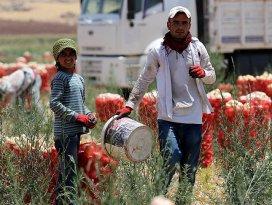 Tarım işçilerinin zorlu yaşamı