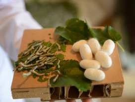 Konyada ipek böcekçiliği yaygınlaşıyor