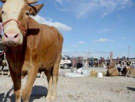Meram'da kurban pazarına kayıtlar başladı