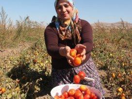 Türkiyede bir ilk! Çiftçi kadınlar yaptı