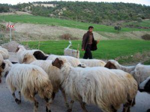 Konyad bir çoban ölü bulundu