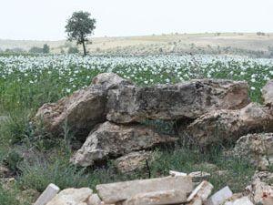 Taşlı tarlayı ıslah etti, tarım ürünleri ekiyor