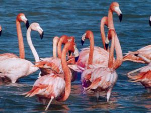 Flamingolar Konyaya döndü