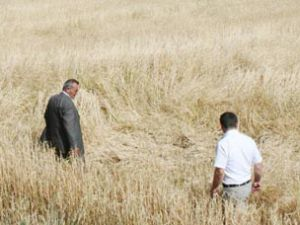Beyşehirde çiftçiyi sel ve dolu vurdu