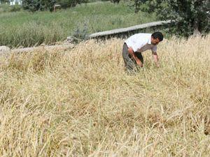 Beyşehir de ekili alanlarda zarar tespit çalışmaları başladı