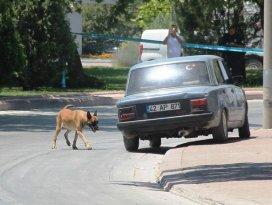 Konya İl Jandarma Komutanlığı önünde şüpheli araç