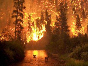 Orman yangınlarına kameralı önlem