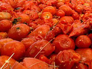 350 bin ton domates çöpe gitti