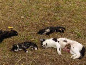 Hayvanlara insanlık dışı şiddet artıyor