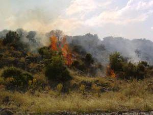 Beyşehir Gölündeki Ada da yangın