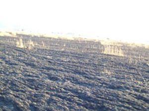 Buğday ekili tarlada yangın