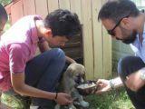Öğrenciler hayvanlar için barınaklar yaptı