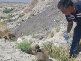 Konyada 12 köpek telef edilmiş halde bulundu