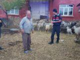 Konyada kaybolan koyunları jandarma buldu