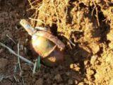 Kızıltepe'de eylem hazırlığındaki 2 terörist öldürüldü