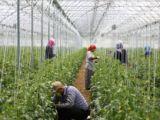 Tarım işçilerinin ramazanda ekmek kavgası